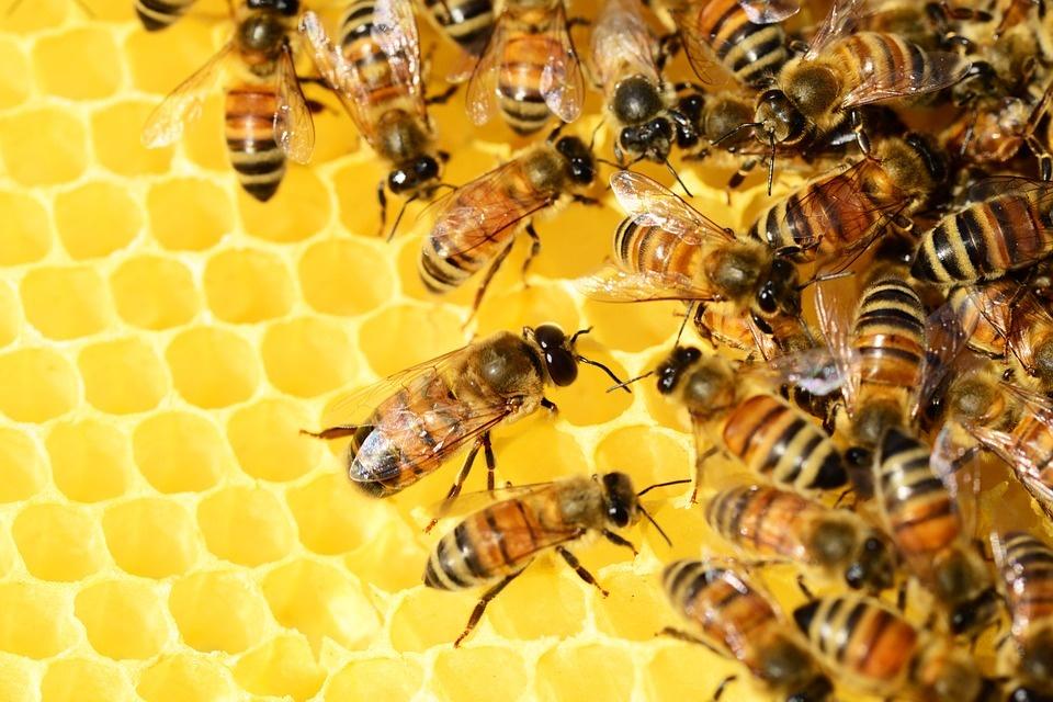 Zo stresu vás vyliečia včely: v Bratislave otvorili relaxačný apidomček