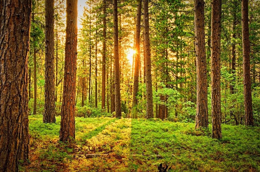 wood forest.jpg